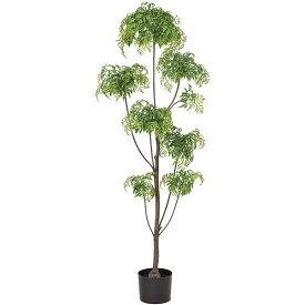 人工観葉植物 全高1.55m アラリア アラレア ディジゴセカ 人工樹木 造花 花材 リーフ 葉材 インテリアグリーン フェイクグリーン オブジェ ディスプレイ ディスプレー 装飾