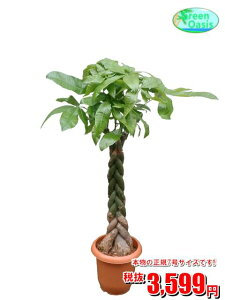 植物 通販 観葉