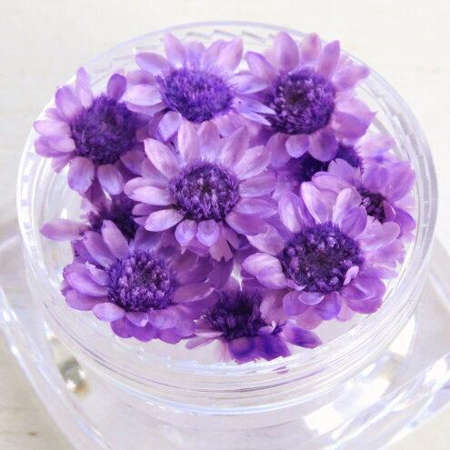【ドライフラワー】少し小ぶりの12輪 単色 スターフラワー 《ぶどう》 [小花,プリザーブドフラワー,花材,flower,グレープ,紫]