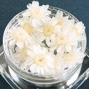【ドライフラワー】少し小ぶりの12輪 単色 スターフラワー 《スノー》 [冬,小花,プリザーブドフラワー,花材,flowe…