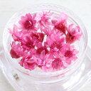【ドライフラワー】 プチサイズ15輪 単色 スターフラワー 《艶華》 [小花,プリザーブドフラワー,花材,flower,春,s…