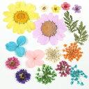 ■【訳ありアウトレット】約17枚 押し花 《おまかせMIX》 おひとりさまお一つ限り [訳あり,花,はな,スターフラワ…