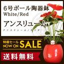 【送料無料】アンスリューム/アンスリウム ダコタ(約65cm)6号ボール陶器鉢(白色/赤色)ハート型の花をつけたトロピカ…