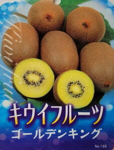 収穫【果樹苗 キウイフルーツ(ゴールデンキング)】