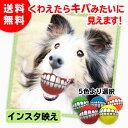 犬用ボール おもちゃ インスタ 写真映え 音が鳴る 面白い プレゼント