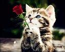 刺繍糸 クロスステッチ刺繍キット 布地に図案印刷 子猫の願い