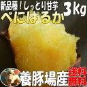紅はるか【2kg増量】3kg→5kgさつまいも!べにはるか豚が育てたサツマイモ しっとり甘いさつま芋千葉県産