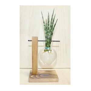 木製花瓶スタンド 水耕栽培花瓶 卓上花瓶 植物栽培ガラス 水栽培容器 ハイドロカルチャー フラスコ1個 fbg-1