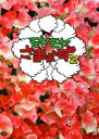 [DVD] モヤモヤさまぁ〜ず2 DVD-BOX(VOL.28、VOL.29)