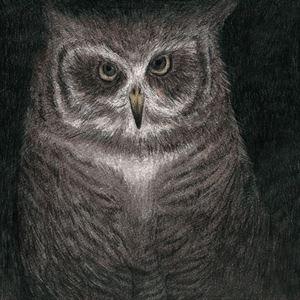 小沢健二とSEKAI NO OWARI / フクロウの声が聞こえる(完全生産限定盤) [CD]