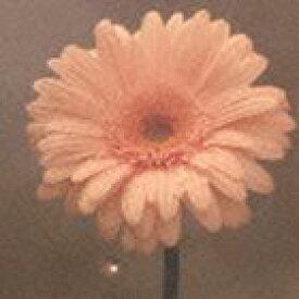 花は咲くプロジェクト / NHK 明日へ 東日本大震災復興支援ソング: 花は咲く(通常盤) [CD]