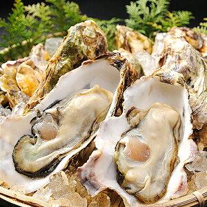 生食用 殻付き牡蠣(カキ) 10個(国産) 冷蔵便 [ 貝 かき 生食 ]