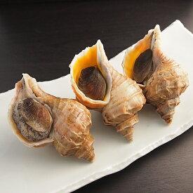 真つぶ貝(エゾボラ貝)500g(北海道産) 冷蔵便 [ 貝 つぶ貝 エゾボラ貝 ]
