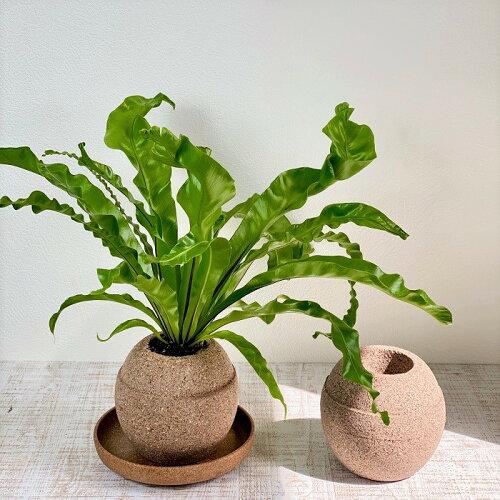 AQUAPLANTPOT(アクアプラントポット)玉(ギョク)M植木鉢水やりが楽な鉢水を吸いあげる鉢水を保持する鉢特許出願中お洒落な鉢
