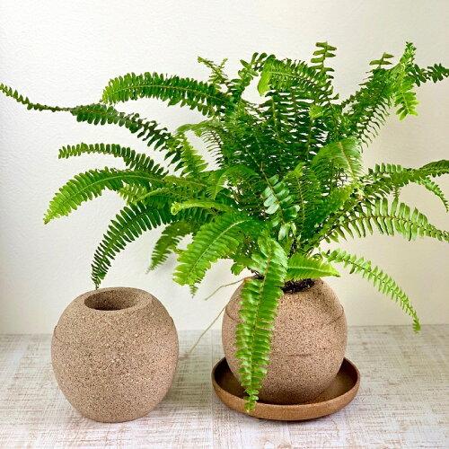 アクアプラントポット:玉(ギョク)L●使って感動!水を吸う鉢でいつも植物が元気♪鉢植木鉢素焼きおしゃれかわいい観葉植物プレゼントアクアポット水やり観葉植物インテリア癒し●玉Lサイズ:W180×D180×H160