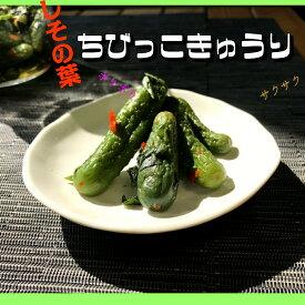 しその葉ちびっこ胡瓜 400gお土産 きゅうり ちびきゅう 小さい胡瓜 ちいさい 【w_fddl】