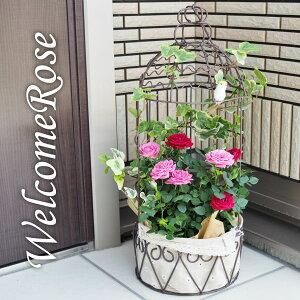 (送料無料) コルダーナローズ 鳥カゴアレンジ ミニ薔薇の寄せ植え バスケット / ミニバラ ミニ薔薇 母の日 ギフト プレゼント 鉢植え 早割 花 ハンギング