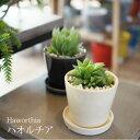 (送料無料)ハオルシア 3号 選べるこだわりの植木鉢! / 多肉植物・ハオルチア・インテリア・陶器鉢
