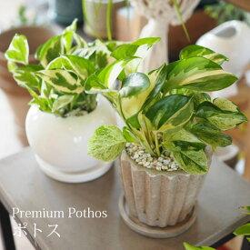送料無料 6種類から選べる プレミアムポトス 4号 / 観葉植物 おしゃれ インテリア ミニ 卓上 エンジョイ エクセレント ステータス ライムコンパクト パーフェクトグリーン 陶器鉢 プレゼント