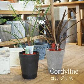 (一部地域送料無料) 4品種から選べる コルジリネ 3.5号(10.5cm) 2鉢セット