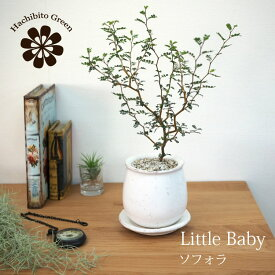 (一部地域送料無料) ソフォラ リトルベイビー 4色から選べる釉薬鉢 受け皿付き 3.5号(11cm)