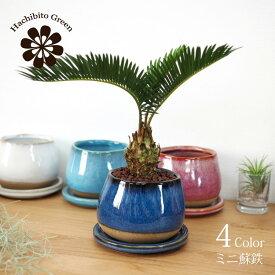 (一部地域送料無料) ミニ蘇鉄 釉薬がきれいな植木鉢でアレンジ 受け皿付き 3.5号(11cm)