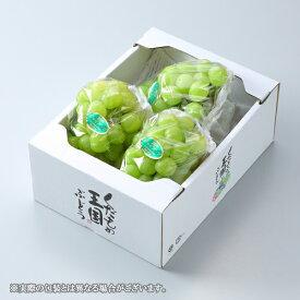 瀬戸ジャイアンツ 岡山県産 JA岡山 赤秀 大粒 3〜5房 約2kg 送料無料 葡萄 ぶどう ブドウ