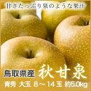 【送料無料】鳥取県産 JA鳥取 『秋甘泉』(あきかんせん) 【青秀】 大玉 8玉〜14玉(約5.0kg) 化粧箱入り