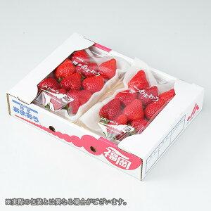 あまおう 福岡県産  グランデ G 約300g×2パック 送料無料 ギフト 苺 いちご イチゴ