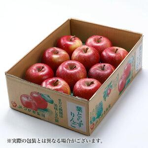 りんご葉とらず太陽ふじりんご 青森県産 JAつがる弘前 糖度12度以上 青秀 ちょっと訳あり 9〜13玉 約3kg 送料無料 新年 お正月 ギフトサンふじ 林檎 リンゴ 1月上旬発送