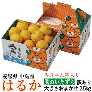 みかん はるか 風のいたずら 訳あり 大きさおまかせ 2.5kg みきゃん箱入り 愛媛県 中島産 柑橘 ミカン バレンタイン ギフト 贈り物