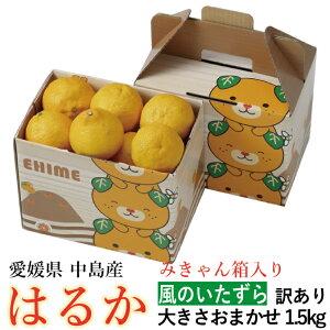 みかん はるか 風のいたずら 訳あり 大きさおまかせ 1.5kg みきゃん箱入り 愛媛県 中島産 柑橘 ミカン バレンタイン ギフト 贈り物