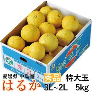 みかん はるか 秀品 特大玉 3L〜2Lサイズ 約5kg 愛媛県産 柑橘 ミカン バレンタイン ギフト 贈り物