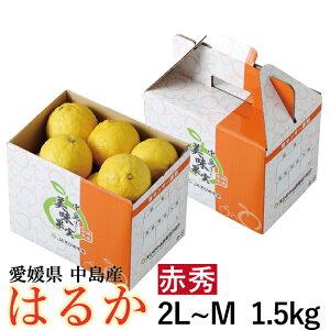 みかん はるか 赤秀 2L~M 1.5kg 愛媛県 中島産 送料無料 柑橘 ミカン バレンタイン ギフト 贈り物