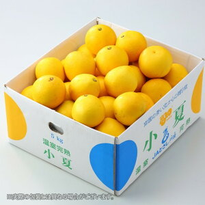 温室完熟 小夏 こなつ  高知県産 JAとさし 3L〜2Lサイズ 5kg  こなつ みかん 送料無料