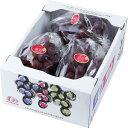 ぶどう 紫苑 しえん 風のいたずら ちょっと訳あり 3〜5房 2kg 岡山県産 JAおかやま 葡萄 ブドウ