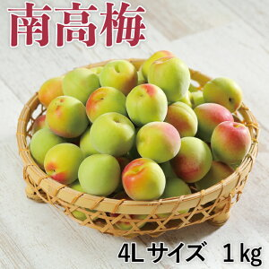 梅 紀州 南高梅 和歌山県産 秀品 4Lサイズ 1kg うめ 青梅 生梅