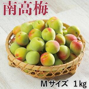 梅 紀州 南高梅 和歌山県産 秀品 Mサイズ 1kg うめ 青梅 生梅