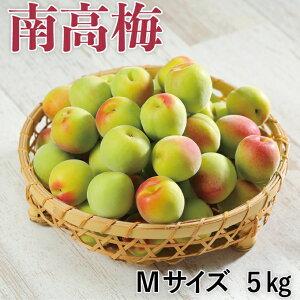 梅 紀州 南高梅 和歌山県産 秀品 Lサイズ 5kg うめ 青梅 生梅