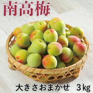 梅 紀州 南高梅 和歌山県産 秀品 大きさおまかせ 3kg うめ 青梅 生梅