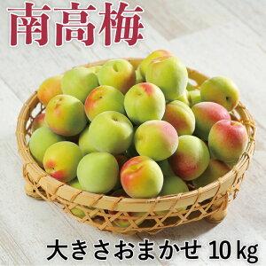 梅 梅 紀州 南高梅 和歌山県産 秀品 大きさおまかせ 10kg うめ 青梅 生梅