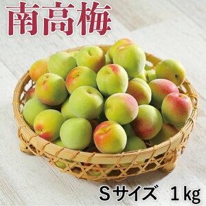梅 紀州 南高梅 和歌山県産 秀品 Sサイズ 1kg うめ 青梅 生梅
