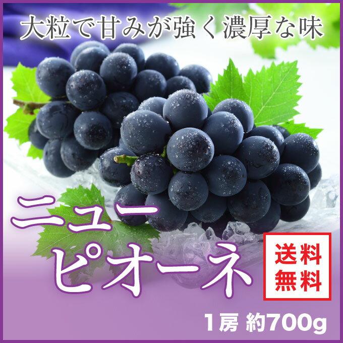 ニューピオーネ  岡山県産 JAおかやま 赤秀 700g×1房 送料無料 ぶどう 葡萄 ブドウ