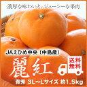 JAえひめ中央(中島産)『麗紅』 せとかの姉妹品種 青秀 3L〜Lサイズ(約1.5kg) 【送料無料】