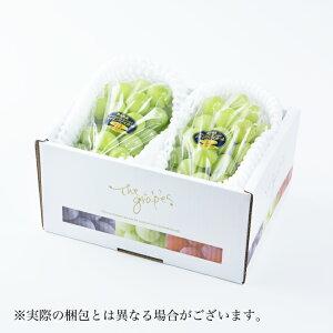 シャインマスカット  晴王  岡山県産 JAおかやま 青秀  約500g×2房 送料無料 ぶどう 葡萄 ブドウ
