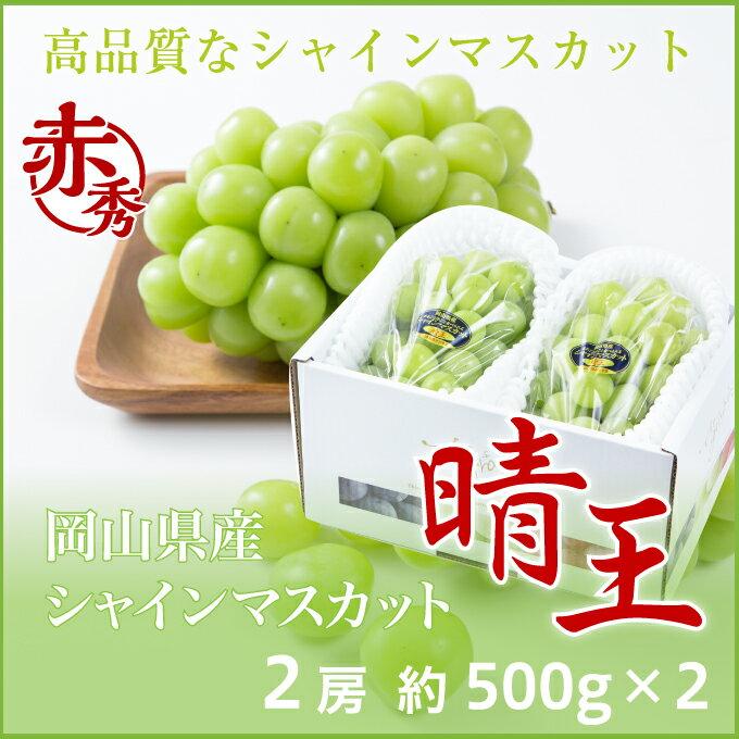 シャインマスカット 晴王  岡山県産 JAおかやま 赤秀 約500g×2房  送料無料 ぶどう 葡萄 ブドウ
