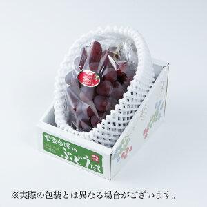 紫苑 しえん 岡山県産 JAおかやま 赤秀  1房 約700g  送料無料 贈り物 ギフト 葡萄 ぶどう ブドウ