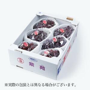 紫苑 しえん 岡山県産 JAおかやま 青秀  4〜8房  約4kg  送料無料 贈り物 ギフト 葡萄 ぶどう ブドウ
