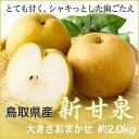 【送料無料】 鳥取県産 『新甘泉』(しんかんせん)ちょっと訳あり 大きさお任せ(約2.0kg)