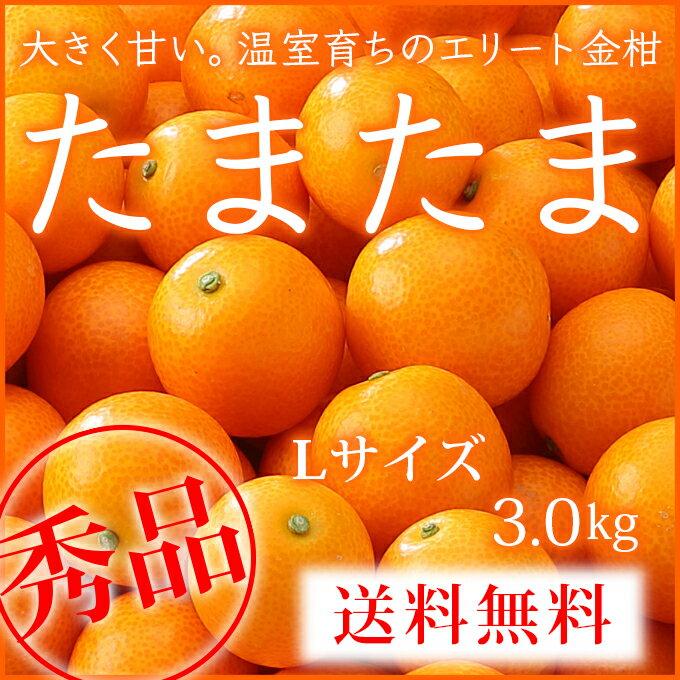 【送料無料】宮崎県産 完熟きんかん 『たまたま』 秀品 Lサイズ(3.0kg) 【1月下旬より発送】